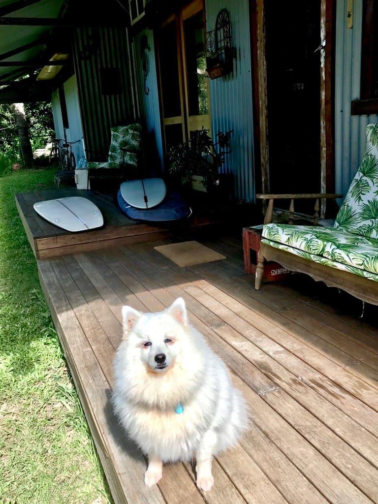 Lola sunning herself on the Studio deck. gallery image