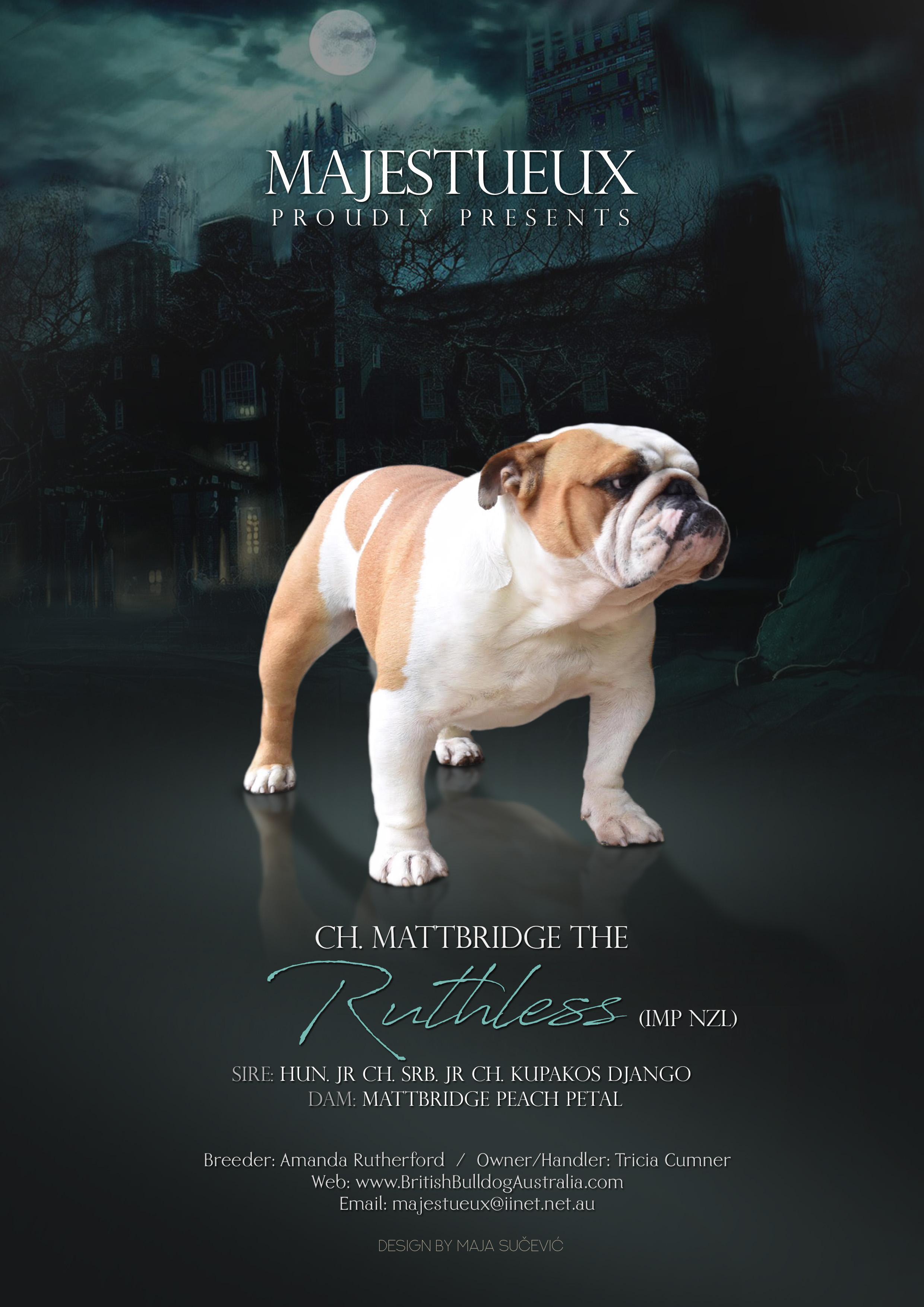 Ch. Mattbridge The Ruthless (Imp NZL) gallery image