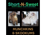 Short-n-Sweet - Munchkin and Skookum Breeder - Mackay