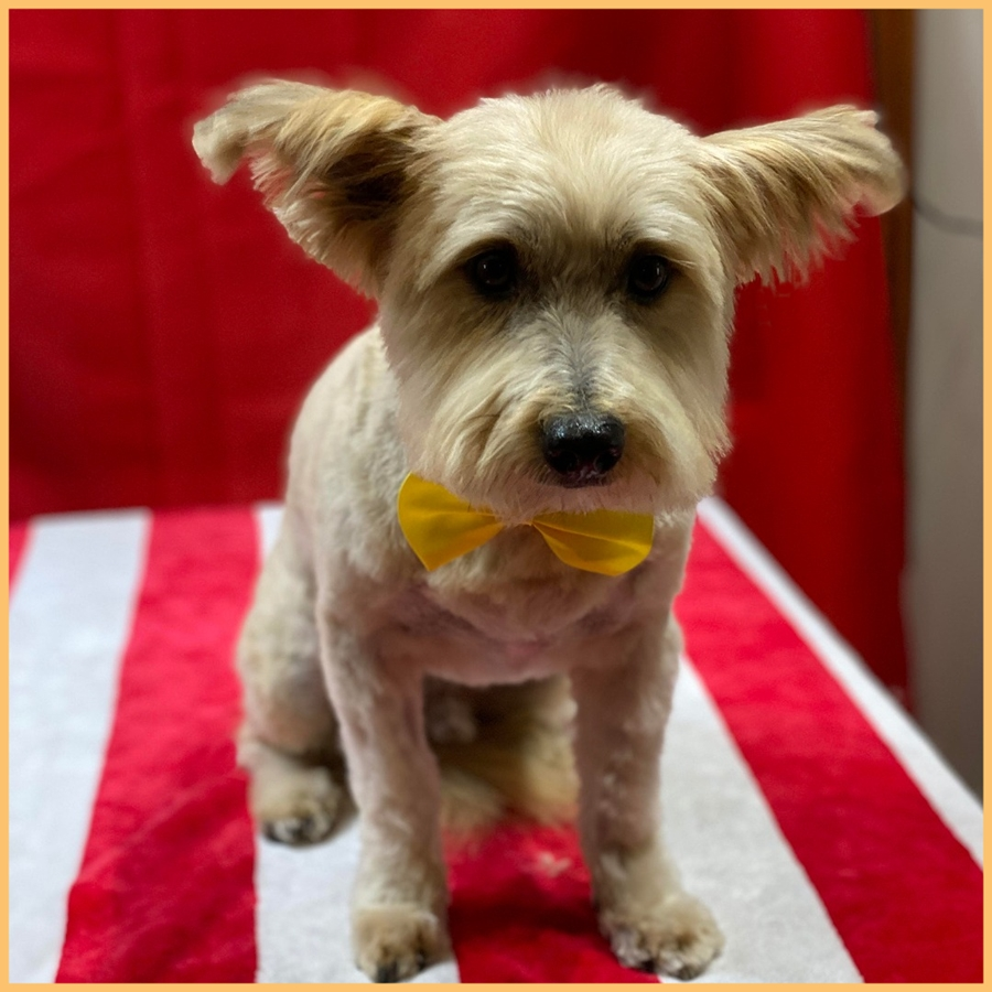 Terrier mix gallery image
