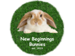 New Beginnings Bunnies - Rabbit Breeder - Nowra Hill, NSW