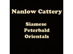 Nanlow Cattery - Siamese, Orientals & Peterbald Breeder