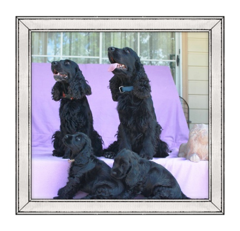 Chloe & Blue Boy & Pups gallery image