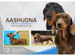 AASHUDNA - Miniature Smooth Dachshund Breeder - Sydney, NSW