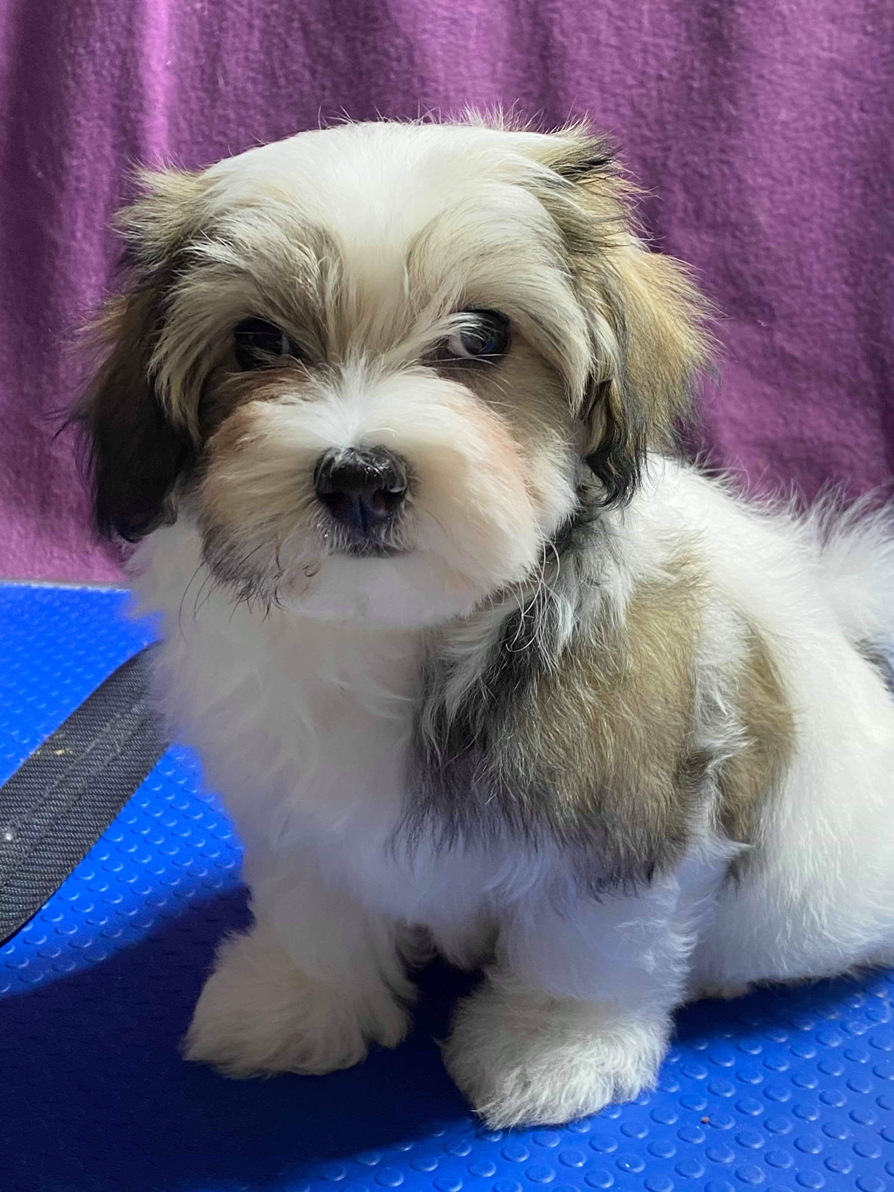 One of beautiful puppies gallery image