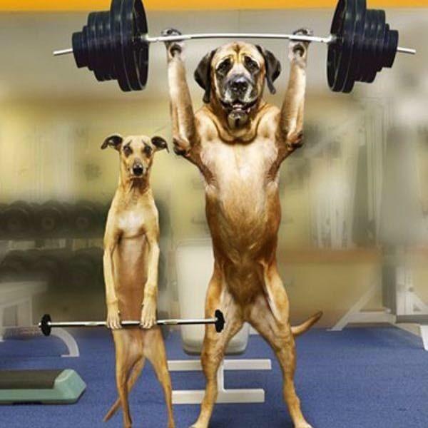 Iron Dog Rescue