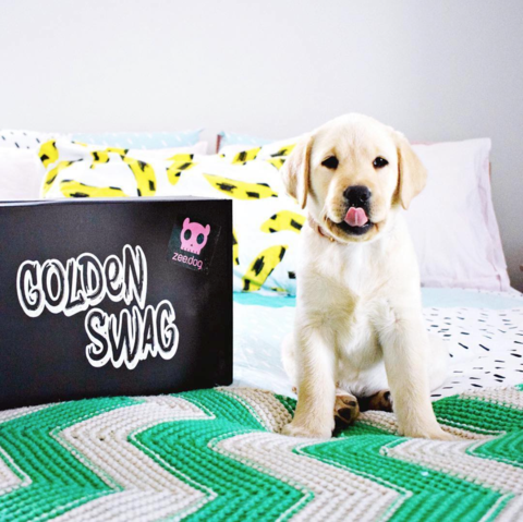 Personalised Puppy Gift Box – Tough Toys & Healthy gallery image