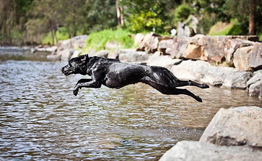 Dog Photographers gallery image
