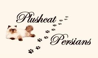 Plushcat
