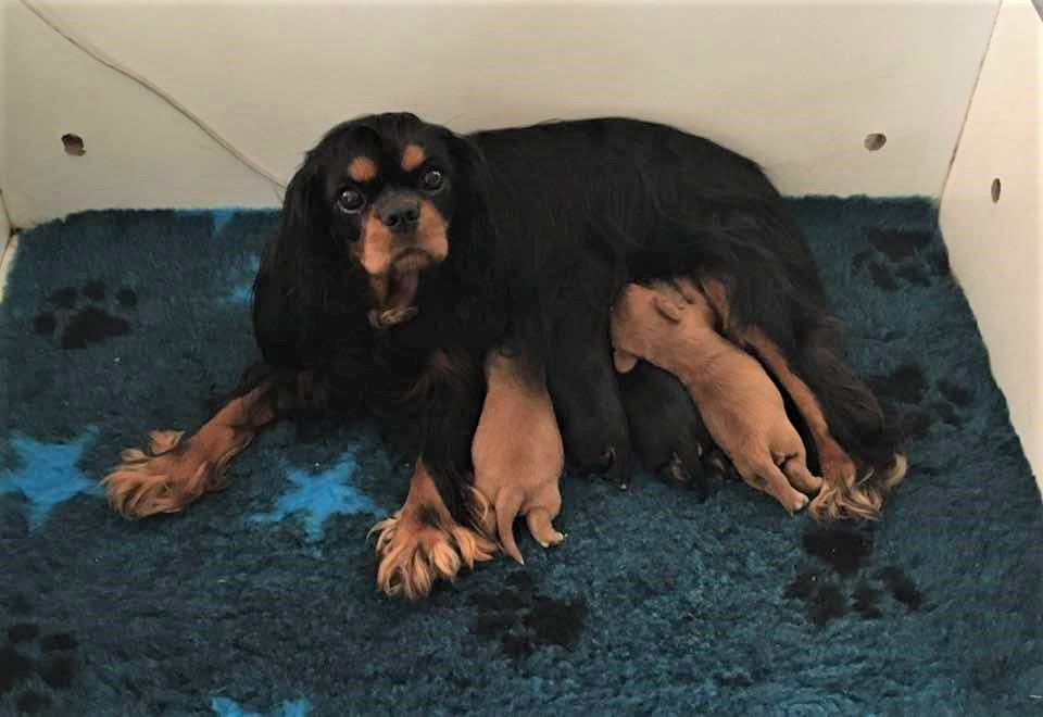 Wynter and her 1st Litter gallery image