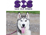 Save Our Strays Rescue, Sydney