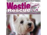 Westie Rescue Tasmania - Dog Rescue & Rehoming - Devonport, TAS