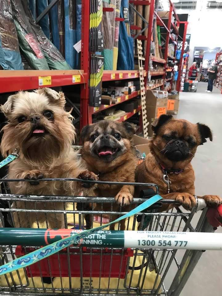 Griffons love shopping gallery image