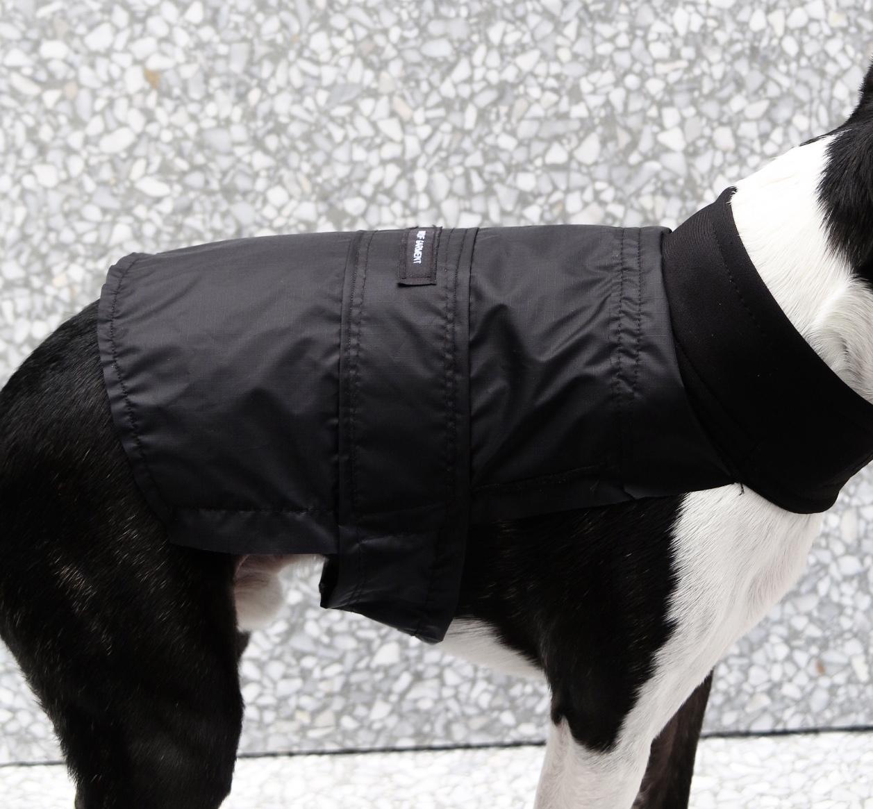 Black Dog Jacket  gallery image