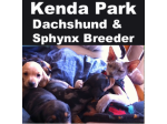 Kenda Park-  Sphynx Cat Breeder - Bathurst, NSW