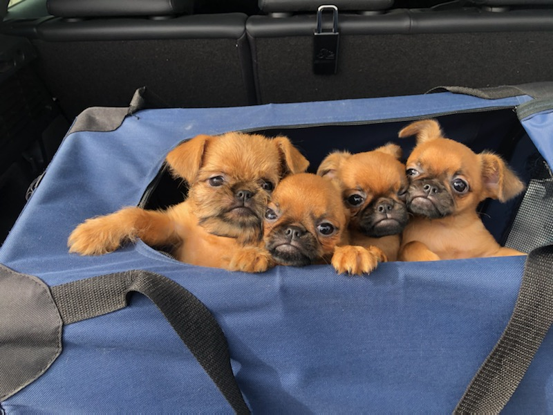 Pups in crate gallery image