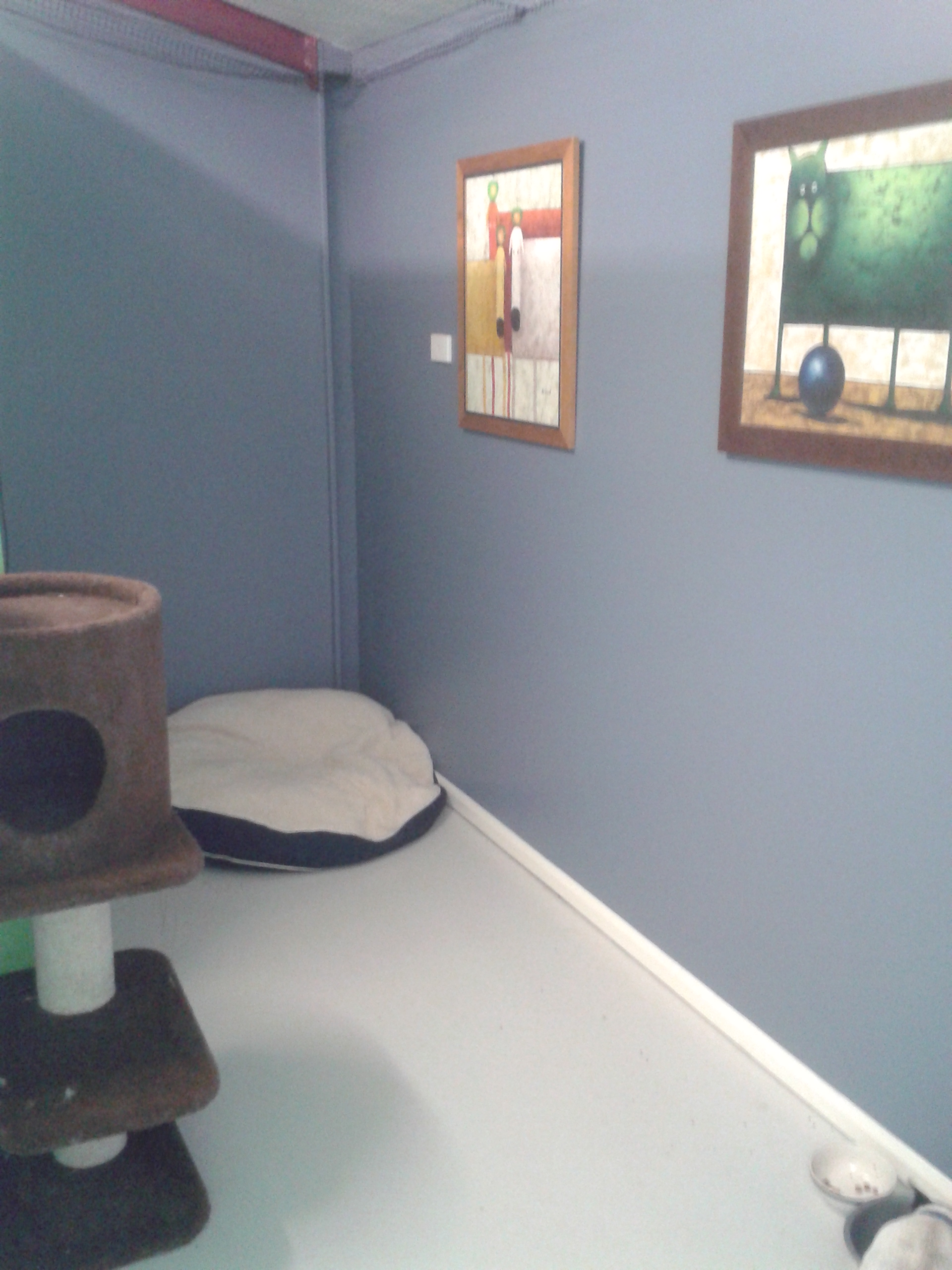 Blue cat room gallery image
