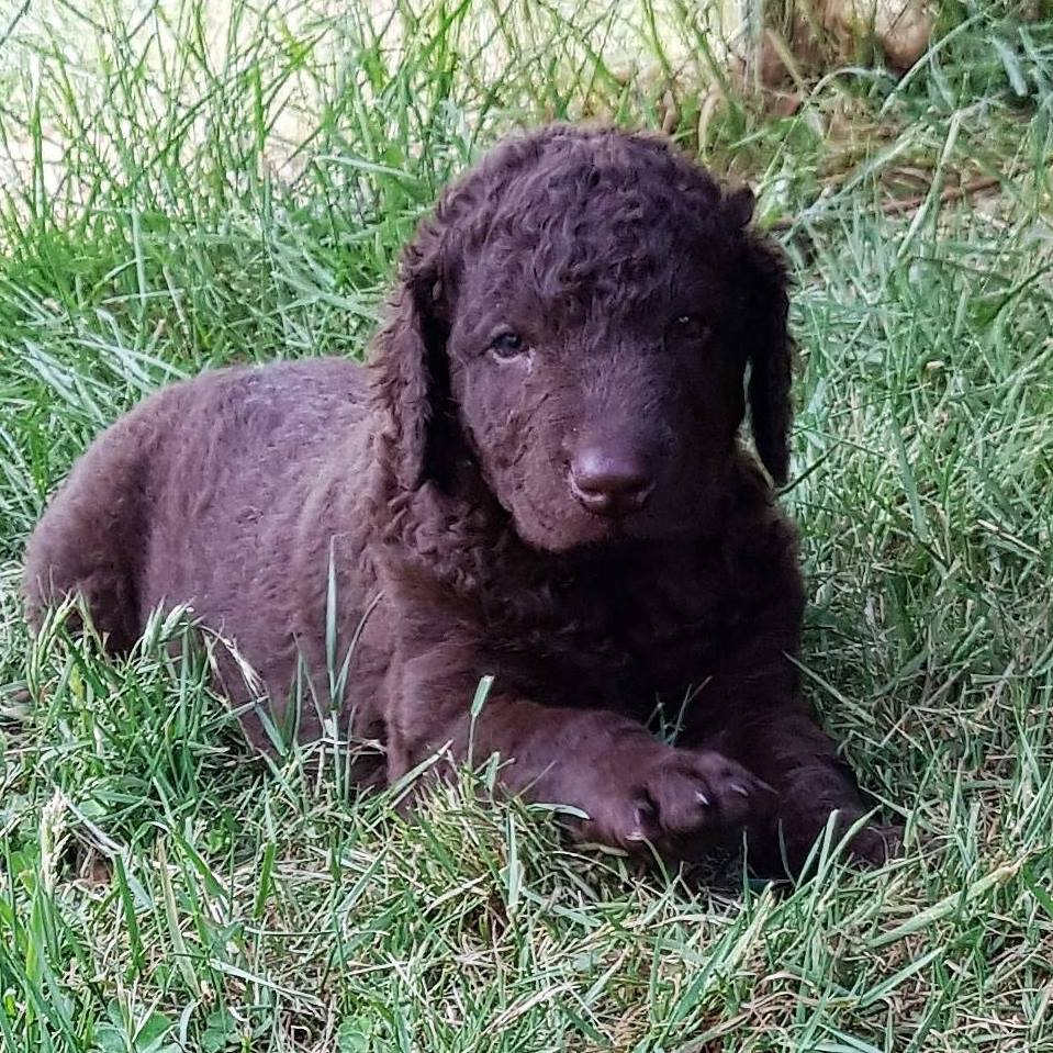 Curlbrook pup gallery image
