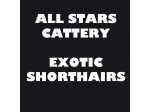Allstars Cattery - Exotic Shorthair Breeder - Brisbane
