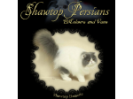 Shawtop Persians - Persian Breeder - Gold Coast