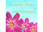 Jesseniah Siamese - Breeder - Gold Coast