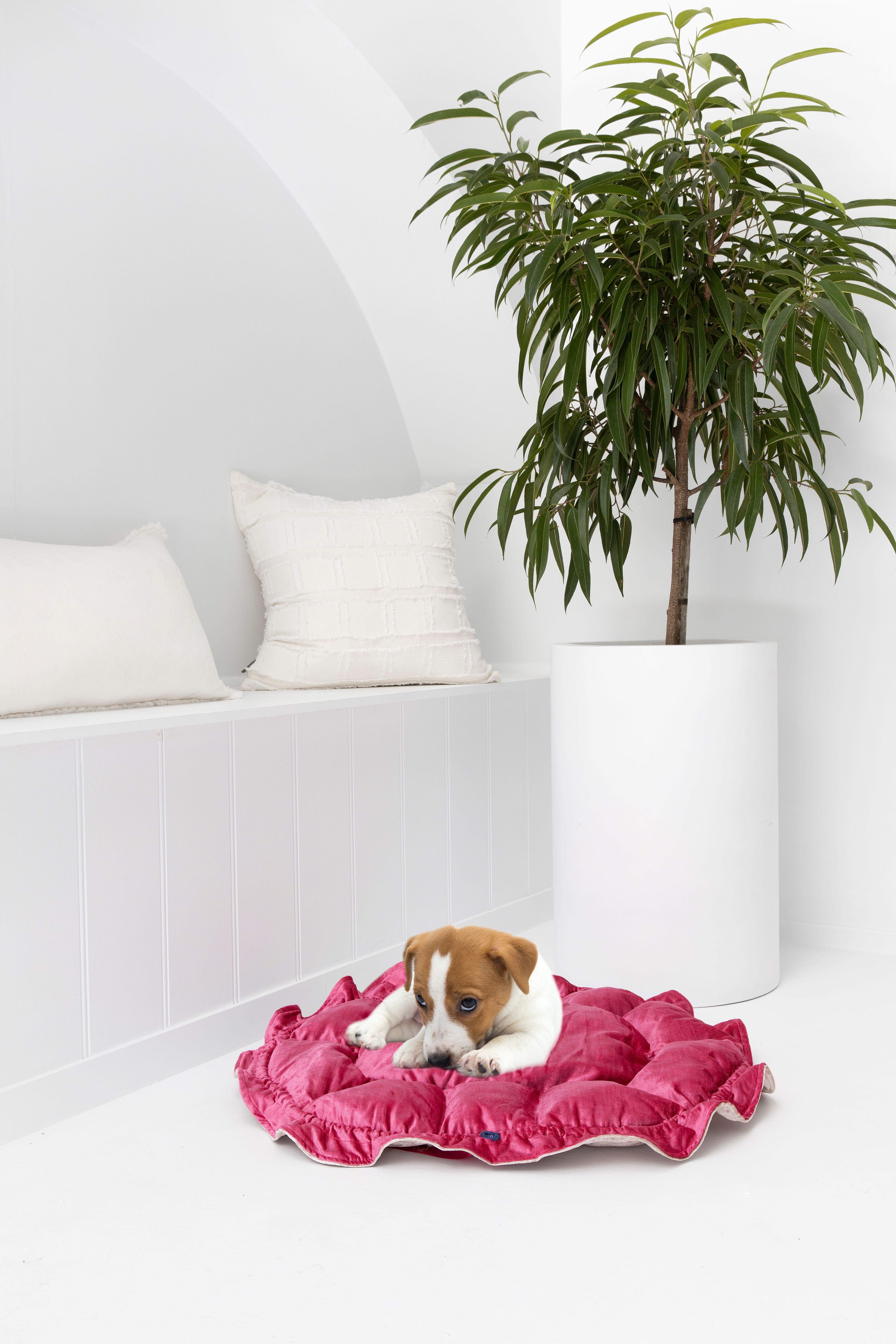 Pink & Gold Velvet Pet Bed