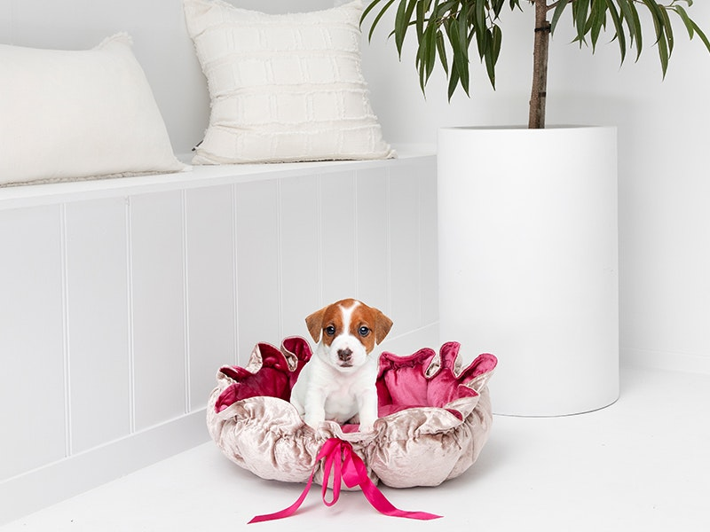 Pink & Gold Velvet Pet Bed gallery image