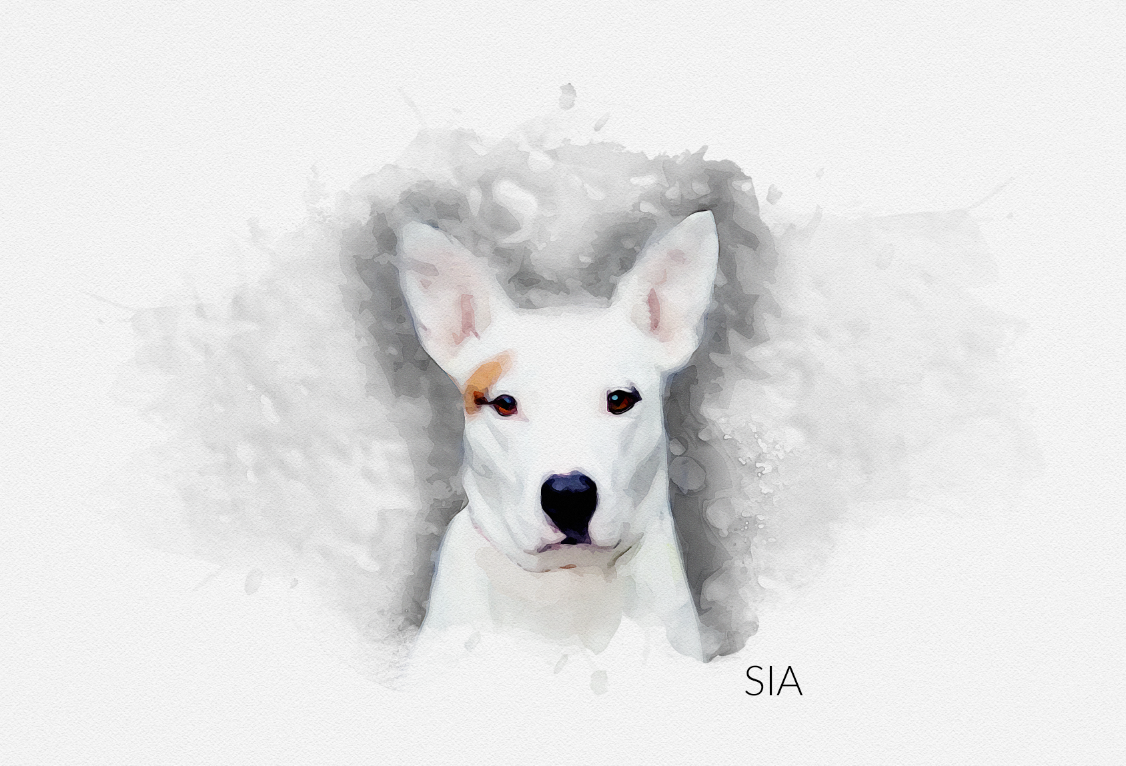 Custom Pet Portraits - Paws for Giving - Sia gallery image