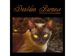 Deneden - Burmese Cat Breeders Aust, Queensland - Sunshine Coast