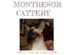 Montresor Cattery - Siamese Breeder - Cairns