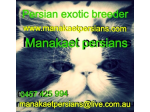 Manakaet Persians - Persian Exotic Breeder - Mallee Victoria