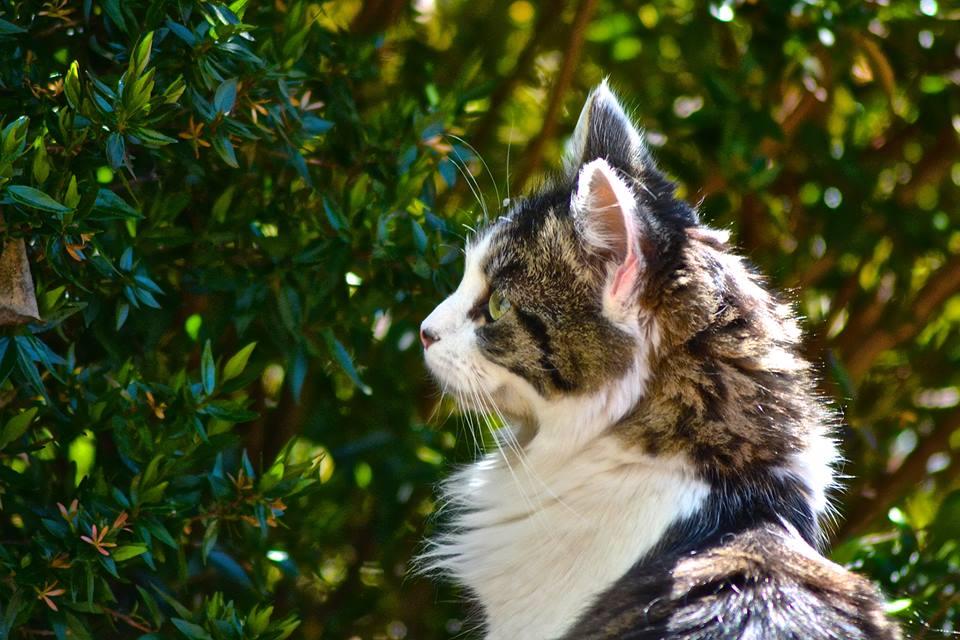 Feline photoshoot gallery image