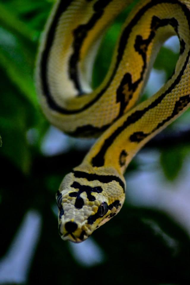Reptile Photoshoot gallery image
