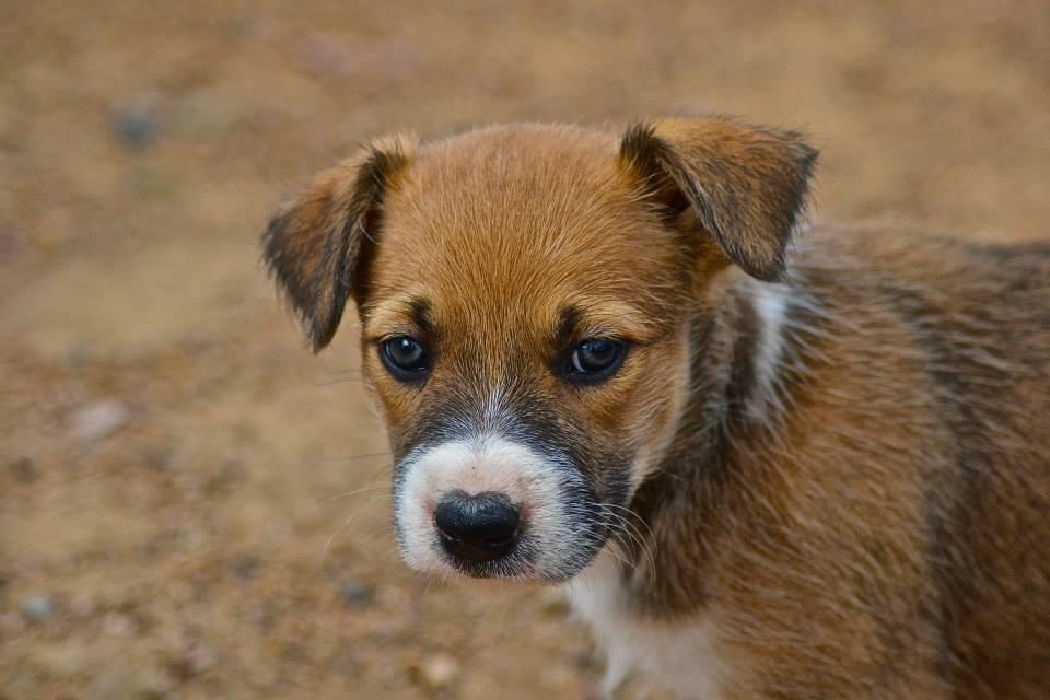 Canine Photoshoot gallery image