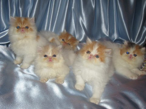 Litter of kittens gallery image
