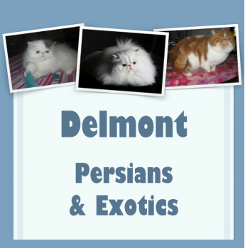 Delmont  - Persians and Exotic Cat Breeder - Adelaide, SA