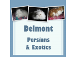 Delmont Persians and Exotics - Breeder and Cattery - Adelaide