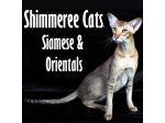 Shimmeree Cats - Siamese and Oriental Breeder - Adelaide