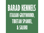 Barad Kennels - Italian Greyhound, Tibetan Spaniel, Saluki Breeder - Hobart