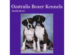 Ozstralis Boxer Kennels - Boxer Breeder - Devonport, TAS