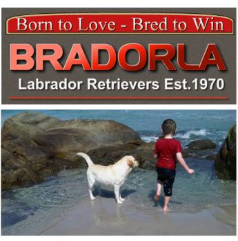Bradorla - Labrador Breeder - Hobart, TAS