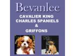 Bevanlee - Cavalier King Charles Spaniel & Griffon Breeder - Tasmania