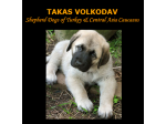 TAKAS VOLKODAV - Anatolian Shepherd Dogs &  Central Asian Shepherds