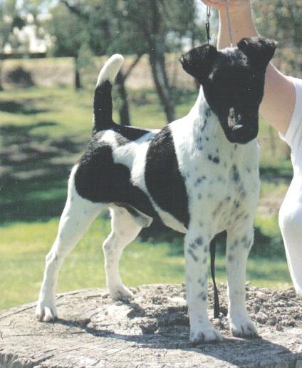 Australian Grand Champion Triplefun Dunnromin gallery image