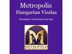 Metropolis - Hungarian Vizsla Breeder, Sydney NSW