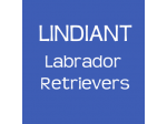 Lindiant Labrador Retriever Breeder - Sydney, NSW