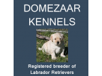 Domezaar Kennels - Labrador Retriever Breeder - Newcastle