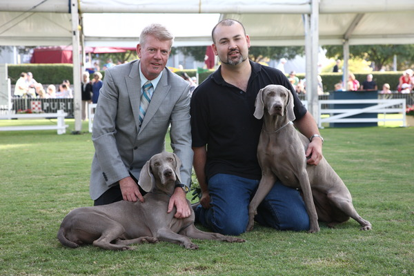 2012- Sydney Royal- Maddi RU Best of Breed  gallery image