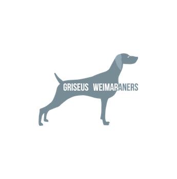 Griseus Kennels Weimaraner Breeder Sydney Nsw