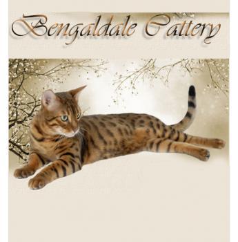 Registered Bengal Cat Breeders in Perth